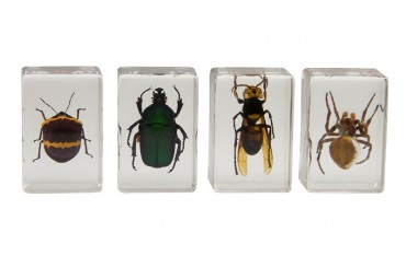 Celestron 3D Bug Specimen Kit No.2
