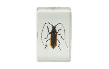 Celestron 3D Bug Specimen Kit No.1-44407
