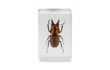 Celestron 3d Bug Specimen Kit No.3-44409