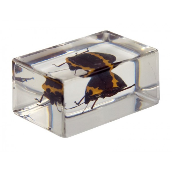 Celestron 3d Bug Specimen Kit No.2-44408
